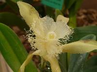 LAUSANNE Exposition d'orchidées à Bern