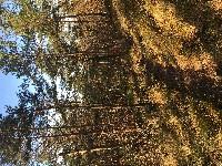 PARIS Marche forêt de Fontainebleau :  boucle avec retour à Fontainebleau ou parcours rejoignant une autre gare de la forêt si les trains marchent pour revenir à Fontainebleau