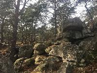 PARIS Marche Fontainebleau à Bois-le-Roi 30 km beau parcours personnalisé nous cumulerons plusieurs chaos rocheux , mix sentiers Dénécourt ,du non balisé ,du GR