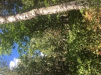PARIS Rando forêt de Fontainebleau 25-30 km de 9h30 à 18h30 nous irons de chaos rocheux en panoramas