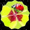 profil de Orchidee